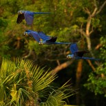 The Amazing Biodiversity of the Amazon Rainforest