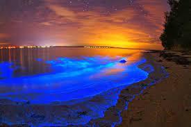 Bioluminescent Bay, Puerto Rico